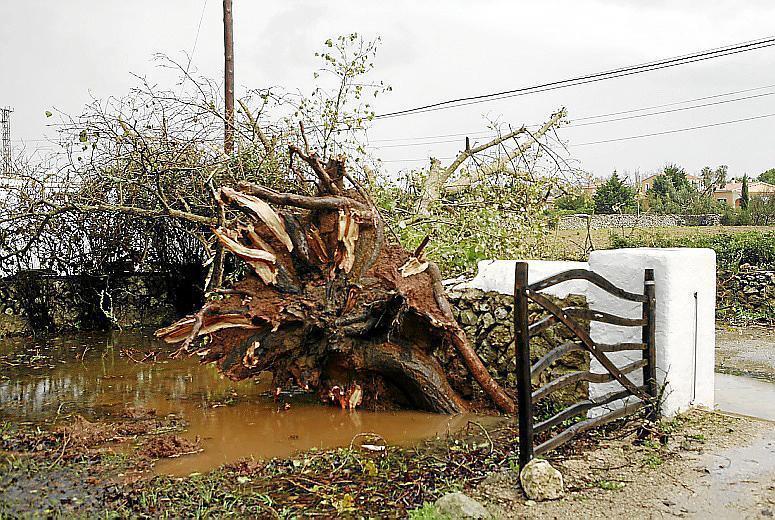 Agustí Jansà: «El cambio climático favorece fenómenos como el 'cap de fibló'» Es diari Menorca