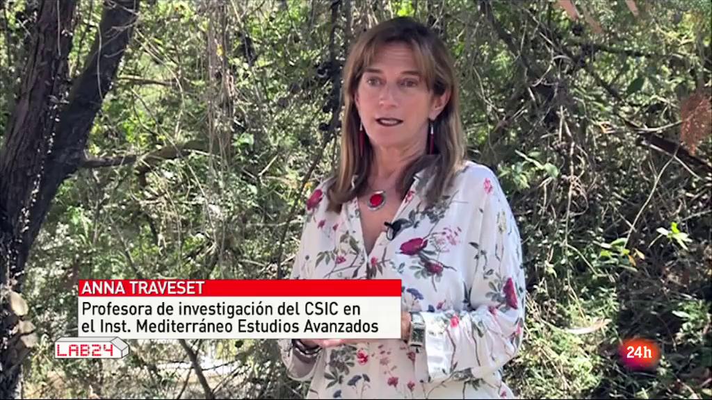 Lab24, Canal 24 horas de TVE «Un mar para investigar desde Mallorca»